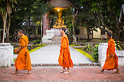 "11 MARCH 2013 - LUANG PRABANG, LAOS:  Buddhist monks walk past a statue of the Buddha in a temple in Luang Prabang during the tak bat. The ""Tak Bat"" is a daily ritual in most of Laos (and other Theravada Buddhist countries like Thailand and Cambodia). Monks leave their temples at dawn and walk silently through the streets and people put rice and other foodstuffs into their alms bowls. Luang Prabang, in northern Laos, is particularly well known for the morning ""tak bat"" because of the large number temples and monks in the city. Most mornings hundreds of monks go out to collect alms from people.   PHOTO BY JACK KURTZ"