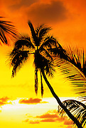 Sunset, Palm Tree<br />
