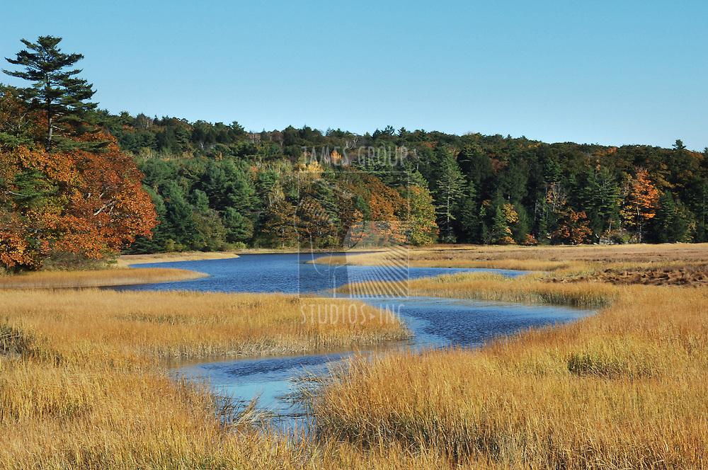 Autumn shot of marshy wetlands