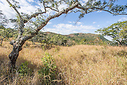 Grasslands and open woodland, Cecil Kop Nature Reserve, Mutare, Manucaland Province, Zimbabwe
