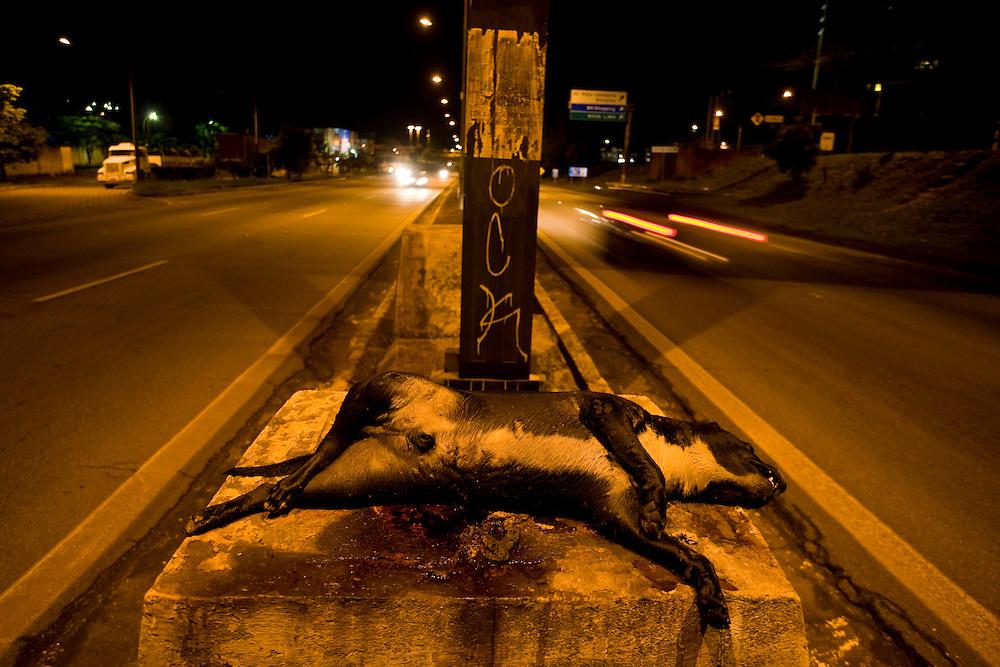 Belo Horizonte_MG, Brasil...Cachorro morto em uma rodovia em Belo Horizonte...The died dog in the motorway in Belo Horizonte...Foto: LEO DRUMOND / NITRO