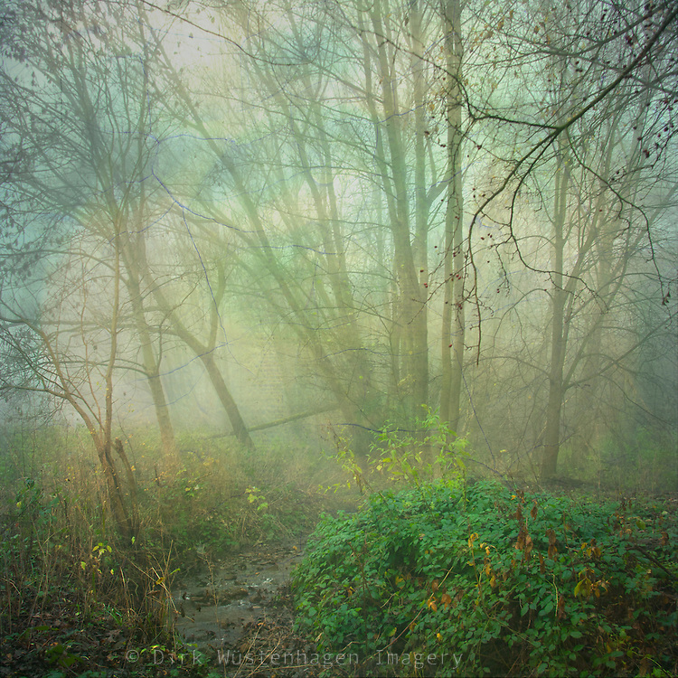 Misty morning at a nearby creek