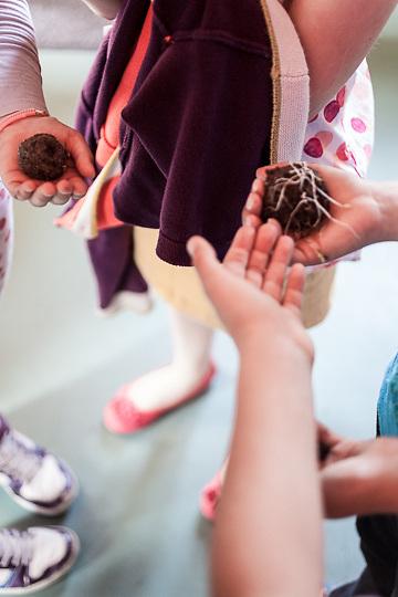 Seed pod throwing, fleurs, school, francoise, cabris, france