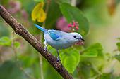 Costa Rica Birds & More