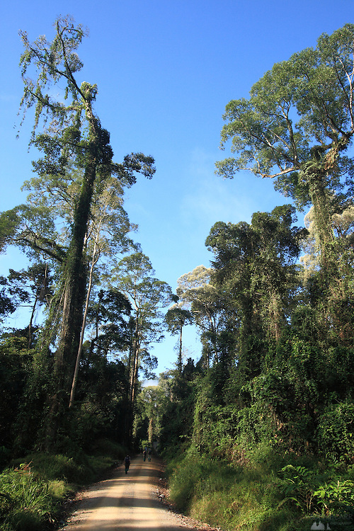 Images around the Rainforest Lodge in Sabah's Danum Valley, in Malaysian Borneo