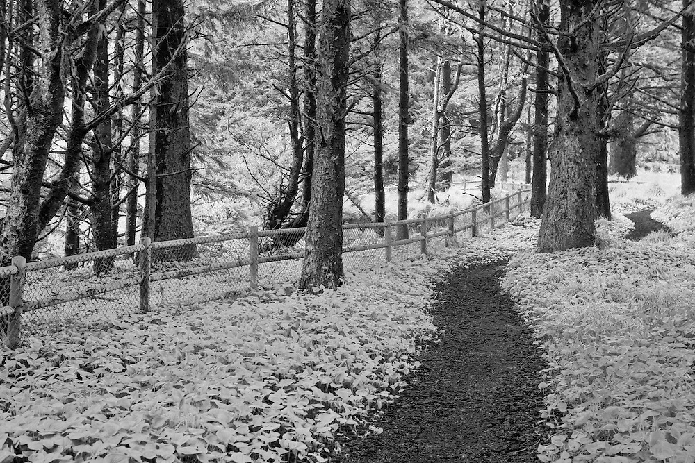 Arch Rock Point Forest Path - Oregon Coast - HDR - Infrared Black & White