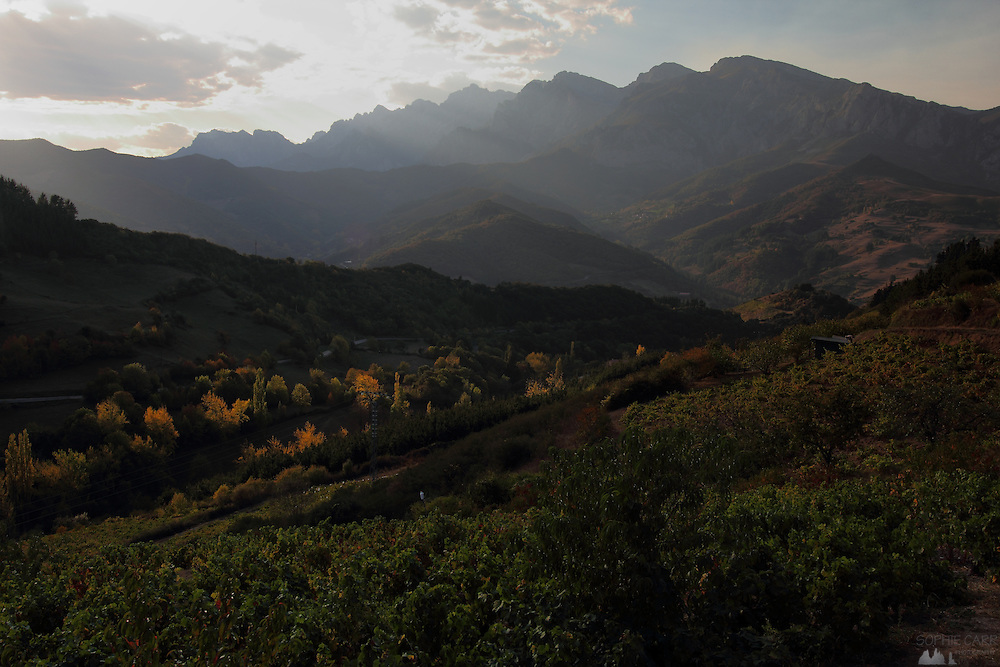 Evening sun falls over the vineyards near San Pedro de Bedoya, near Potes in the south-eastern area of the Picos de Europa, northern Spain