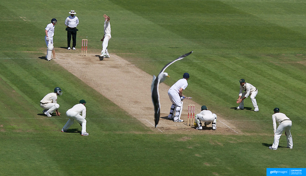 A seagull circles as Nathan Hauritz bowls during the England V Australia  Ashes Test series at Cardiff, Wales, on Sunday, July 12, 2009.