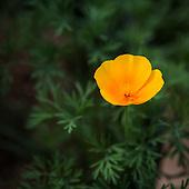 Tohono Chul flowers