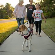 ROYAL PALM BEACH, FLORIDA, MARCH 15, 2017<br /> Cynthia Greaux  and her children; Tyler, 14, and Chloe, 8, walk home with their recently adopted dog &quot;Ginger&quot; from the dog park a short walk from their house. Greaux is able to use vouchers to pay for their enrollment at a private school that specializes in educating children with dyslexia.<br /> (Photo by Angel Valentin/Freelance)