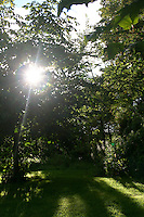 Sunlight shining directly over trees and lawn in Ireland