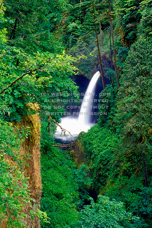 Image of a waterfall along the Eagle Creek Trail in the Columbia River Gorge, Oregon, Pacific Northwest