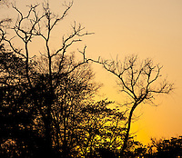 Sunset behind trees, Bardiya National Park, Nepal