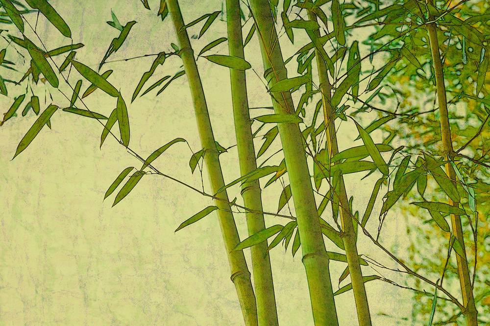 Grunge vintage zen bamboo green natural background with texture