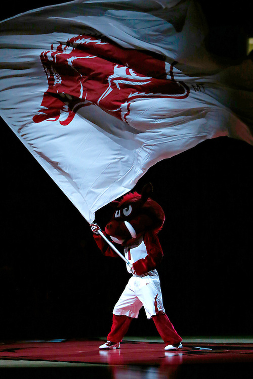 FAYETTEVILLE, AR - NOVEMBER 18:  Mascot of the Arkansas Razorbacks waves the flag before a game against the SMU Mustangs at Bud Walton Arena on November 18, 2013 in Fayetteville, Arkansas.  (Photo by Wesley Hitt/Getty Images) *** Local Caption ***