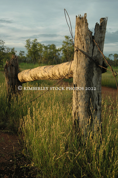 An old fence post on Mt Hart Station, on the Kimberley's Gibb River Road.  Mt Hart is a former cattle station that is now run in partnership by Taffy Abbotts and DEC.