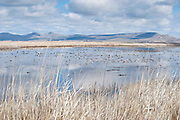 Klamath Basin wetlands, water management, California