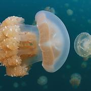 Marine Life | Palau