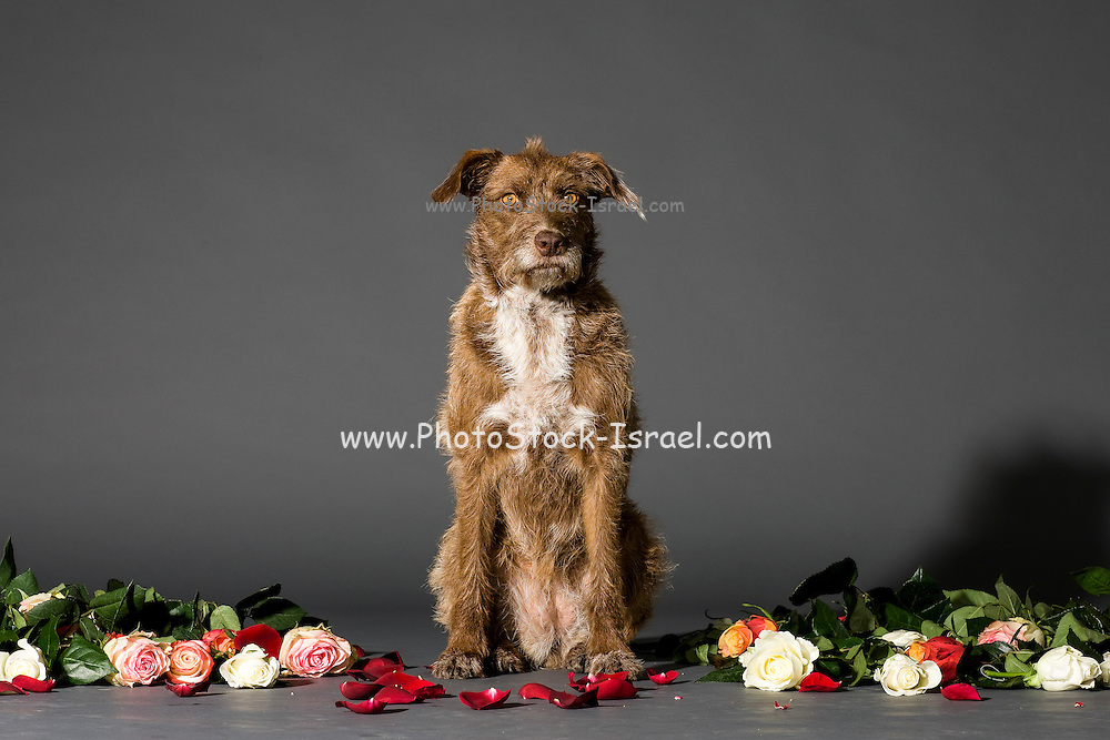 Studio shot of sitting brown dog with flowers on the set