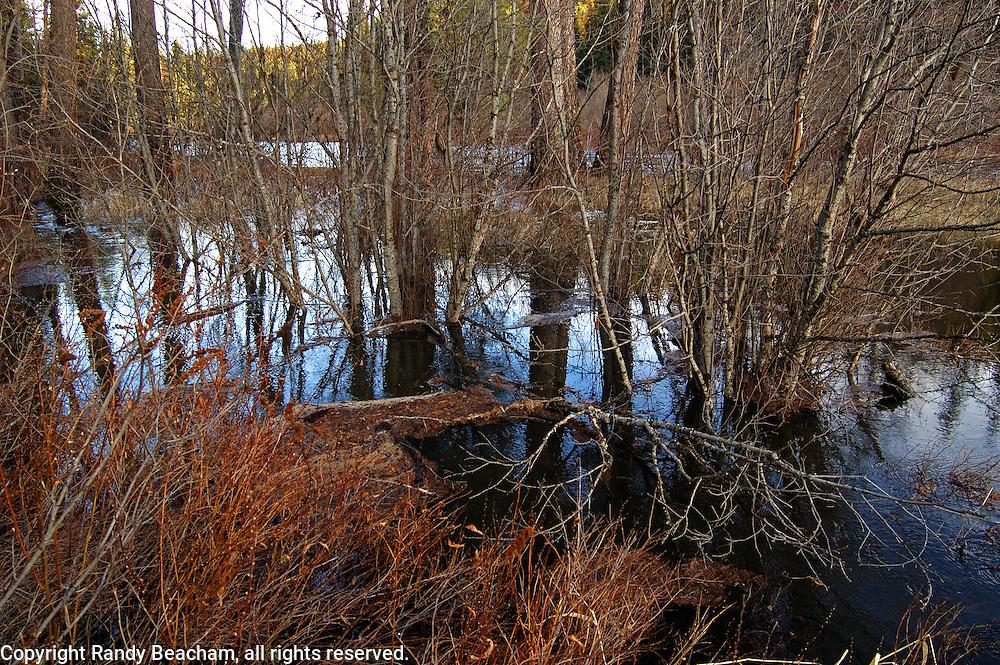 Yaak River flooding in springtime. Yaak Valley Montana