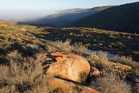Sea fog rolling in over the Namaqua National Park at sunrise, Namaqua National Park, Northern Cape, South Africa,