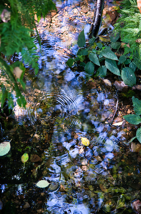 Forest and stream details, Point Reyes, California