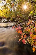 *Colorado Fall Colors