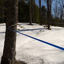 Sap tubing at the Sunday Mountain Maple farm in Orford, New Hampshire.