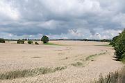 Landschaft mit Getreidefeld im südlichen Odenwald bei Mosbach, Baden-Württemberg, Deutschland   Landscape with grain field in the southern Odenwald Mosbach, Baden-Wurttemberg, Germany