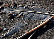 Bird feathers lie on the beach amid other debris March 6, 2011 in Grand Isle, La. The island was heavily impacted by the Deepwater Horizon oil spill April 20, 2010 and continues to recover. The beach has been closed since the oil spill but re-opened in February. (Photo by Carmen K. Sisson)