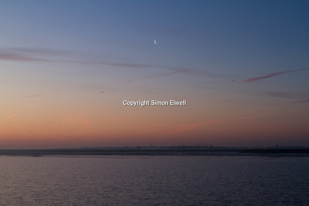 Sunrise and birds flocking with crescent moon - Hamford Water