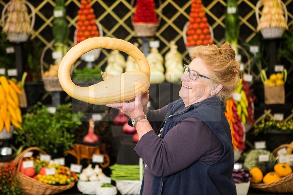 © Licensed to London News Pictures. 17/09/2015. Harrogate, UK. Picture shows Margaret Robinson with her Tromboncino at the 40th Harrogate Autumn Flower show. Photo credit: Andrew McCaren/LNP