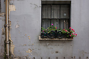 Bright window box of pink carnations amid drab, neglected house in central London. .