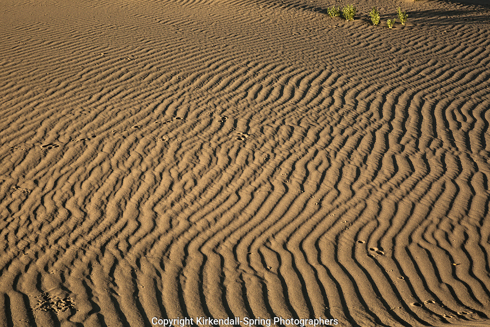 ID00671-00...IDAHO - Tracks on the sand dunes at Bruneau Dunes State Park.