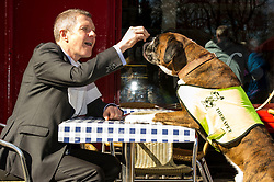 Pictured: Willie Rennie and Harvey the Boxer dog stopped for refreshments at Victor Hugo<br /> <br /> The Scottish Liberal Democrat leader Willie Rennie highlighted analysis revealing the number of working days lost across Scotland due to depression as he met therapy animals from Canine Concern Scotland, a charity which supports people with mental health issues and other conditions. <br /> <br /> Ger Harley | EEm 31 March 2016