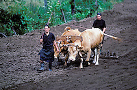 Farmer at Minho province - Portugal