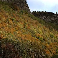 Autumn 2006....  The colours of the trees on the hillside below Kinnoull Tower in Perth.<br />