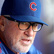 NEW YORK, NEW YORK - June 30: Manager Joe Maddon #70 of the Chicago Cubs in the dugout before the Chicago Cubs Vs New York Mets regular season MLB game at Citi Field on June 30, 2016 in New York City. (Photo by Tim Clayton/Corbis via Getty Images)