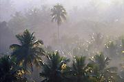 Sri Lanka.<br /> Gold light on palm trees.