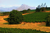ca. March 1999, South Africa --- Vineyards Near a Mountain Range --- Image by © Owen Franken/CORBIS