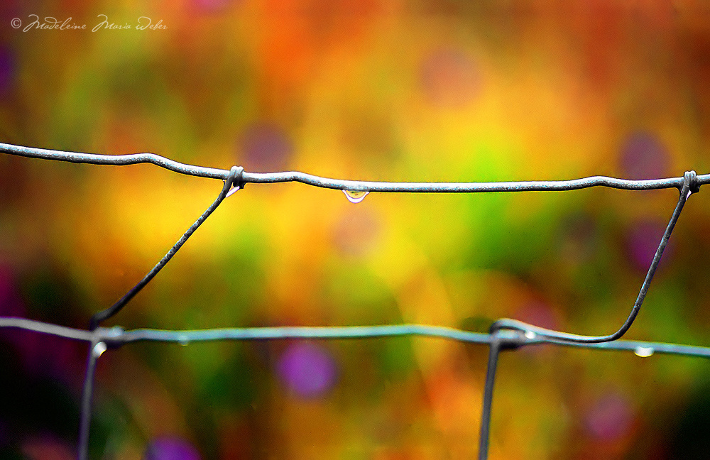 Raindrop on a Fence after Rainshower, co. Kerry Ireland