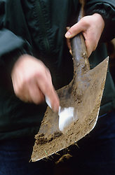 Tool cleaning. Scraping mud off a spade