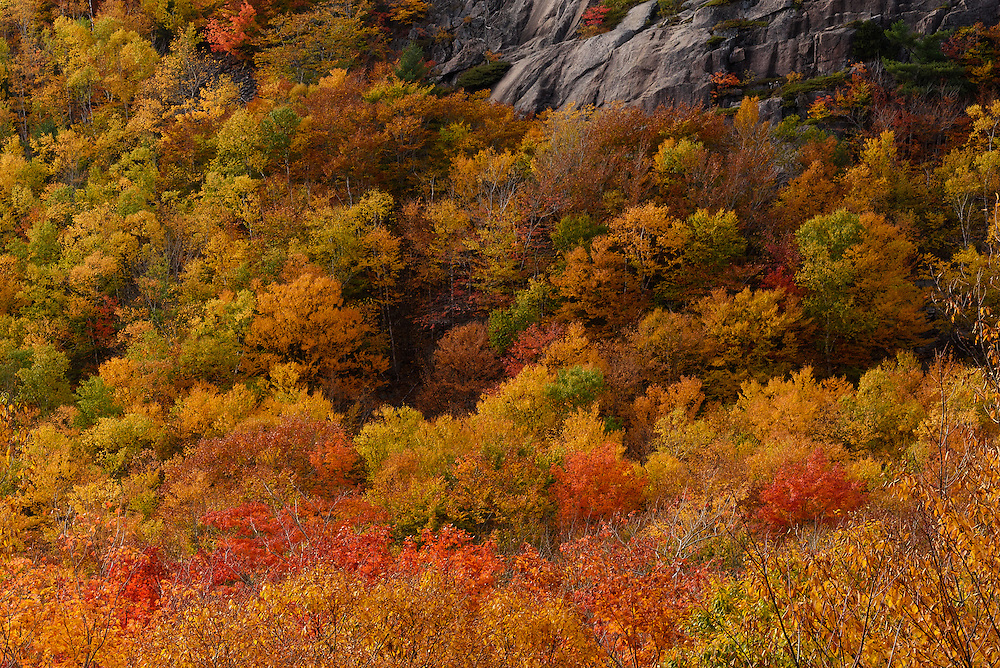 Fall Foliage along the Loop Road, Acadia National Park, Maine