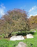 Fyfield Down national nature reserve, Marlborough Downs, Wiltshire, England, UK unimproved chalk grassland with sarsen stones in dry valleys