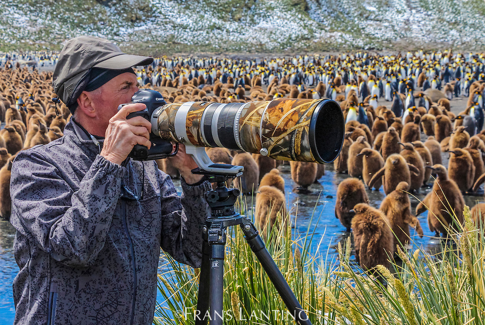 Art Wolfe with King penguin, Aptenodytes patagonicus, Gold Harbour, South Georgia Island