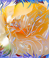 warm colors abstract image with flower and pistils like eveloving shapes from inner orange color center