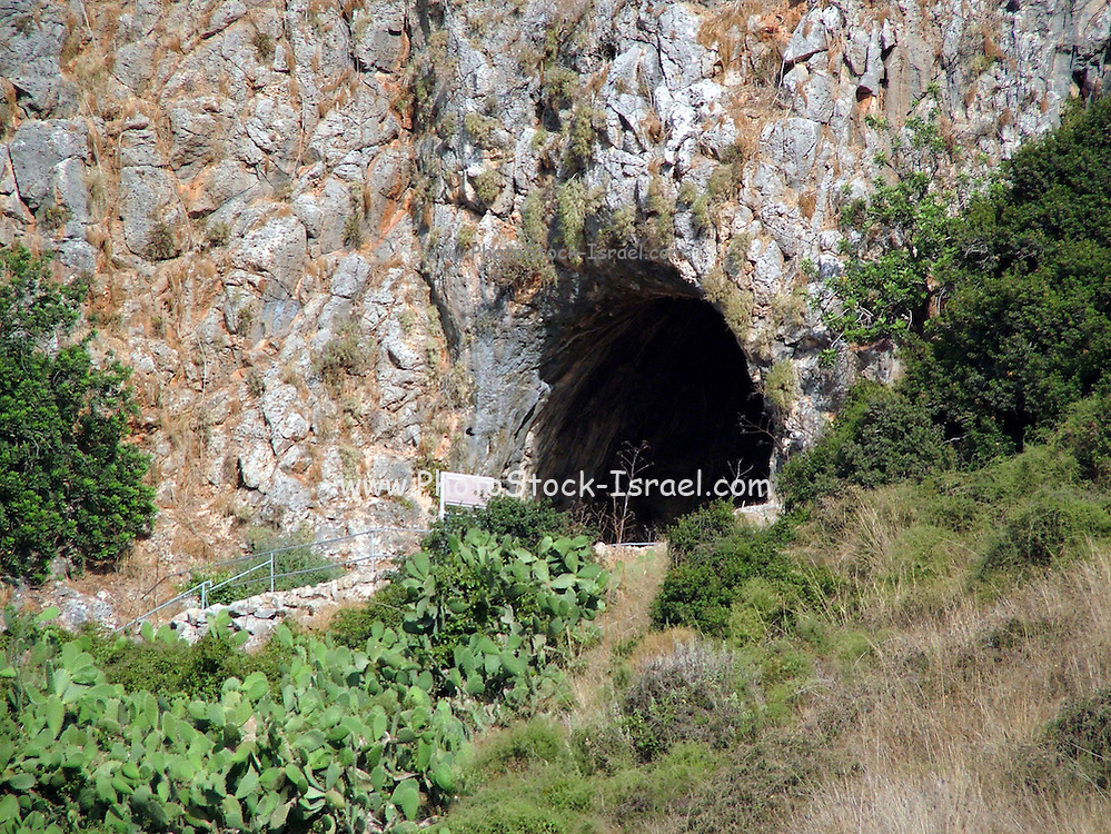 The caves of mount Carmel are located on the western slopes of Mt. Carmel, some 20 km. south of Haifa, where Nahal Me'arot (Valley of the Caves) emerges into the Coastal Plain. They were first excavated in the 1920s and 1930s. Then new digs were conducted from the late 1960s onwards, using advanced scientific methods based on modern geological, archeological and palynological (paleontological study of pollen, fossils, etc.) research. Flint tools, animal bones and human burials found in the Carmel Caves contribute greatly to the understanding of the physical and cultural evolution of man in the early phases of his existence.