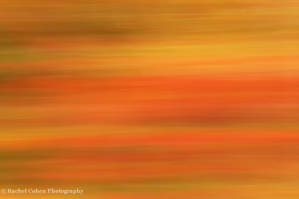 &quot;Autumn Warmth&quot;<br />