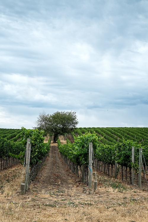 Napa Wine Country | July 20, 2014