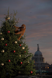 EDITORIAL USE ONLY<br /> An ultra-realistic animatronic orangutan climbs a 20ft Christmas Tree at Coin Street Observation Point, London to highlight the threat to the survival of the species due to deforestation caused by palm-oil production, following Iceland&Otilde;s Christmas advert being banned.